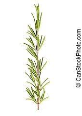 Rosemary isolated on white background. Top view.