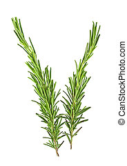 Rosemary isolated on white background, top view