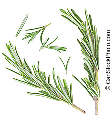 Rosemary on a white background. Top view.