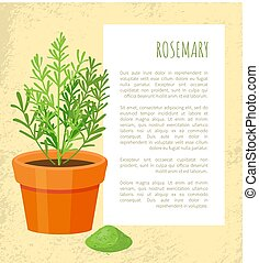 Rosemary Spice Poster and Text Vector Illustration