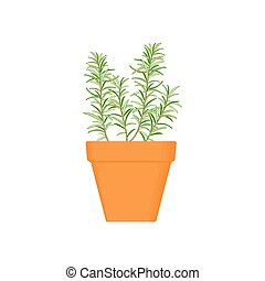 rosemary vector culinary herb in terracotta pot. Green...