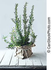 Rosemary Wrapped with paper bag In the white room