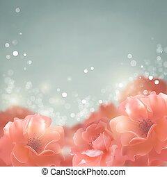 rosen, blumen, hintergrund, blank
