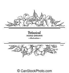 rosen, vektor, pfingstrose, border., weinlese, botanik, drawing., blume