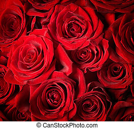 rosen, vorgewählter fokus, rotes , hintergrund.