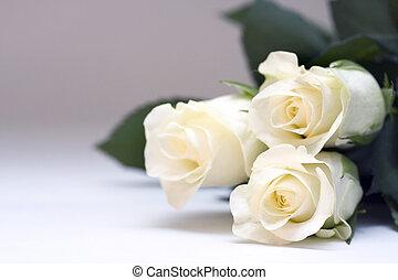 rosen, weißes
