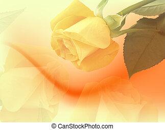 roser, gul, bagtæppe