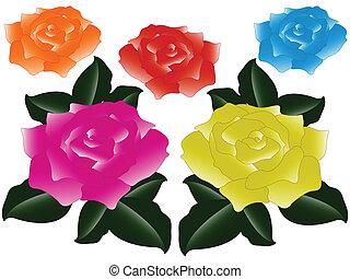 roses against white