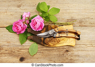 Roses and gloves - Cut roses, gardening gloves and secateurs...