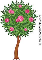 roses, arbres
