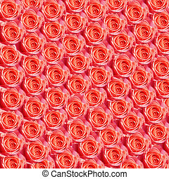 Roses - Background