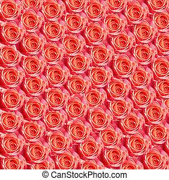 Roses - Background