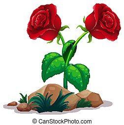 roses, blanc, deux, fond, rouges