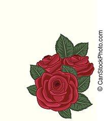 roses, blanc, vecteur, rouges, illustration