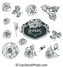 Roses - Collection of hand - drawn roses for your design