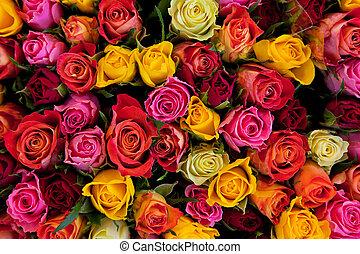 roses, coloré, fond