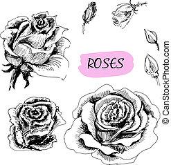 roses., conjunto, de, ilustraciones