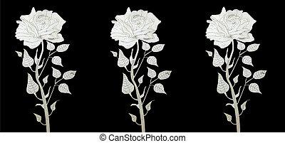 roses, coupure, laser, trois