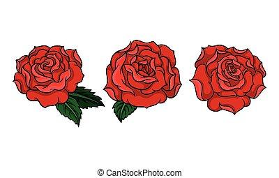 roses, décoratif, feuilles, pétale, soufflé, vecteur, set., rouges