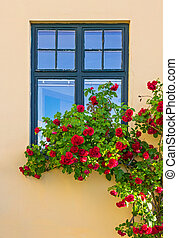 Roses decorating a house