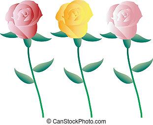 roses, ensemble, coloré