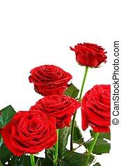 roses, espace copy