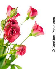 roses, fleurs, rouges