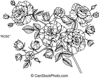 Roses flower. Drawing and sketch with black and white line-art.