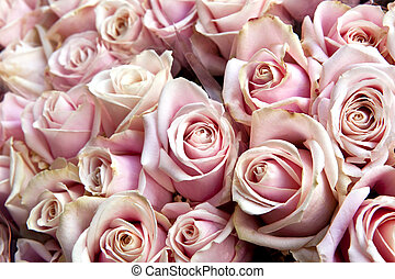 Roses - Focus on a bunch of roses