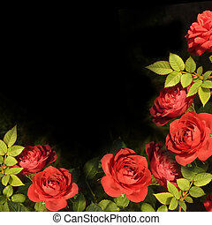 roses, fond, carte, rouges