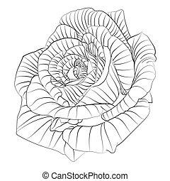 Roses. Hand drawn flower