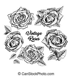 Roses hand drawn sketch illustrations set