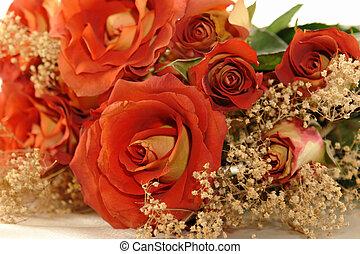 roses, hybride