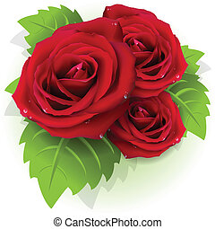 illustration, flowers of the red rose on white background