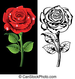 Roses - Set from  red and white roses.