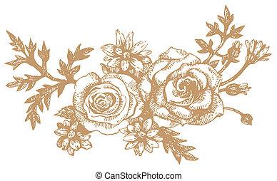 roses., illustrations, hand-drawn