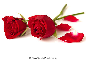 Roses  - Image of roses and petals on white background.