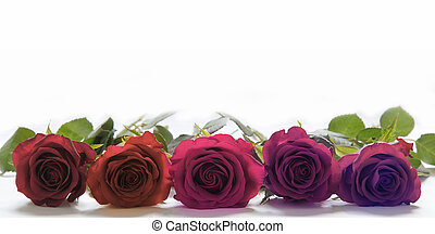 Roses laid in a row