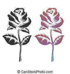 roses, noir, coloré