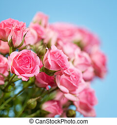 Roses on a blue background. Soft focus