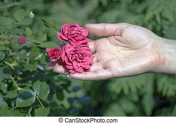 Roses on the palm.