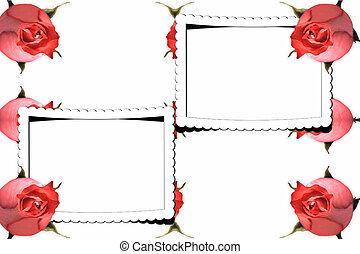 roses, résumé, cadre, rouges