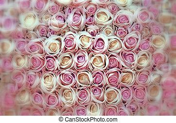 roses roses, blanc