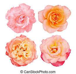roses roses, collection