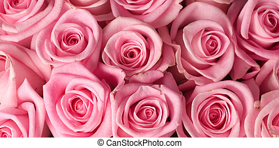 roses roses, fond