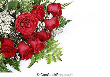 roses rouges, blanc