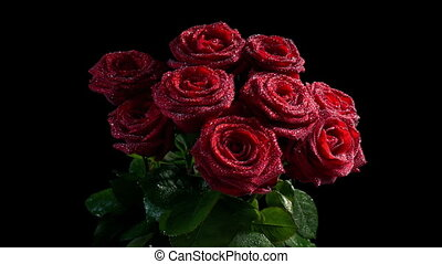 roses, rouges, eau, luire