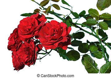 roses, rouges, tas