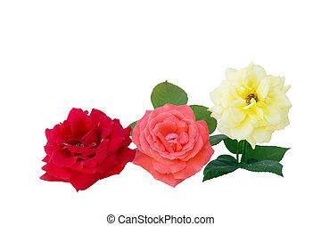 roses, trois