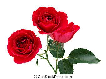 roses, trois, rouges